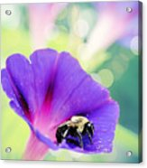Pollinating The Glories Acrylic Print