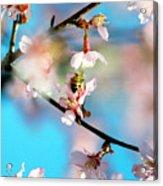 Pollination 1.02 Acrylic Print
