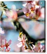 Pollination 1.06 Acrylic Print