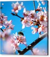 Pollination 1.11 Acrylic Print