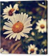Pollination Love  Acrylic Print