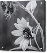 Pollinator Acrylic Print