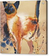 Pollock's Cat Acrylic Print