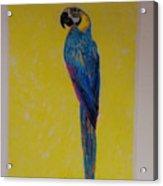 Polly The Parrot Acrylic Print