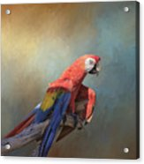 Polly Want A Cracker Acrylic Print