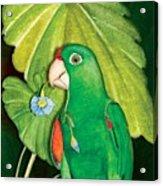 Polly Wants A Flower Acrylic Print