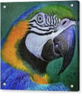 Polly Who Acrylic Print