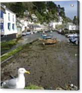 Polperro Harbour Cornwall And Seagull Acrylic Print