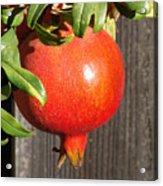 Pomegranate Acrylic Print
