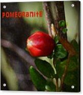 Pomegranite Art II Acrylic Print