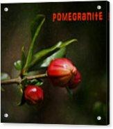 Pomegranite Art Acrylic Print