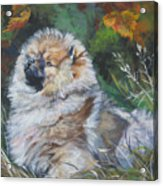 Pomeranian Puppy Autumn Leaves Acrylic Print