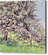 Pommiers Fleuris Acrylic Print