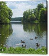 Pond And Ducks Acrylic Print
