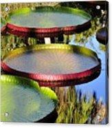 Pond Beauties Acrylic Print