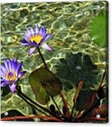 Pond Florals Acrylic Print