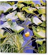 Pond Lilies Acrylic Print
