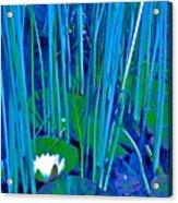 Pond Lily 6 Acrylic Print
