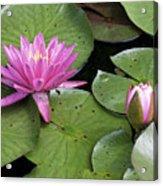 Pond Lily And Bud Acrylic Print