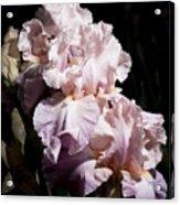 Pond Lily Iris  Acrylic Print