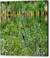 Pond On Cherry Creek Study 2 Acrylic Print