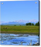 Pond Pasture And  Rocky Mountains Acrylic Print