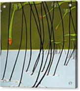 Pond Skaters Acrylic Print