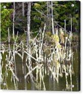 Pond Sticks Acrylic Print