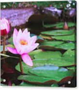 Pond With Water Lilly Flowers Acrylic Print