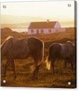 Ponies Grazing In A Field, Connemara Acrylic Print