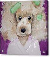 Poodle Acrylic Print