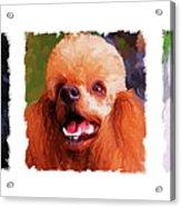 Poodle Trio Acrylic Print by Jai Johnson