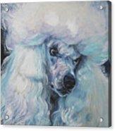 Poodle White Standard Acrylic Print