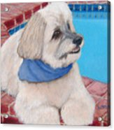 Poolside Puppy Acrylic Print