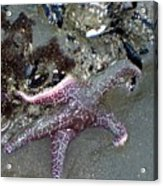 Poor Little Starfish Acrylic Print