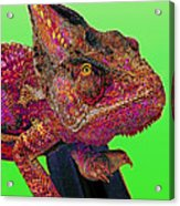 Pop Art Chameleon Acrylic Print