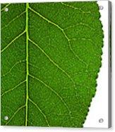 Poplar Leaf A Key To Biofuels Acrylic Print