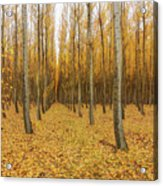 Poplar Tree Farm In Oregon Acrylic Print
