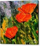 Poppies 107 Acrylic Print