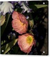 Poppies 6 Acrylic Print