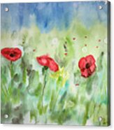 Poppies And Dandelions Acrylic Print