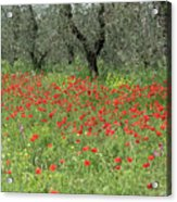 Poppies And Olives Acrylic Print
