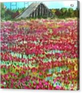 Poppies At Cedar Point Acrylic Print