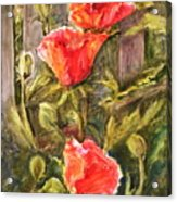 Poppies By The Fence Acrylic Print
