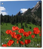Poppies Flatirons Acrylic Print