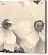 Poppies In Monochrome Acrylic Print