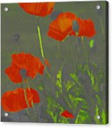 Poppies In Neon Acrylic Print