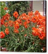 Poppies In Springtime Acrylic Print