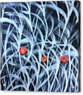 Poppies In The Grass Acrylic Print