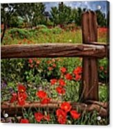 Poppies In The Texas Hill Country Acrylic Print
